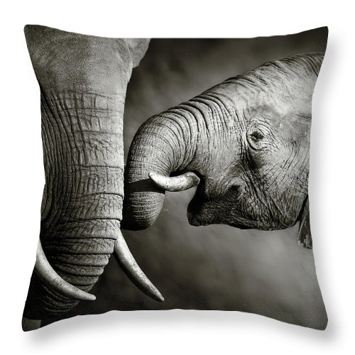Elephant; Interact; Touch; Gently; Trunk; Young; Large; Small; Big; Tusk; Together; Togetherness; Passionate; Affectionate; Behavior; Art; Artistic; Black; White; B&w; Monochrome; Image; African; Animal; Wildlife; Wild; Mammal; Animal; Two; Moody; Outdoor; Nature; Africa; Nobody; Photograph; Addo; National; Park; Loxodonta; Africana; Muddy; Caring; Passion; Affection; Show; Display; Reach Throw Pillow featuring the photograph Elephant affection by Johan Swanepoel