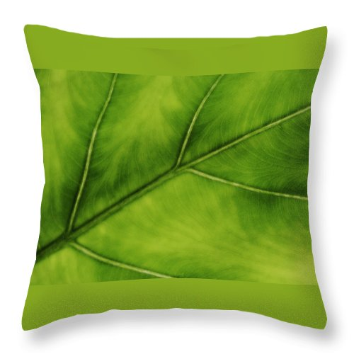 Leaf Throw Pillow featuring the photograph Elephant Ear by Marilyn Hunt