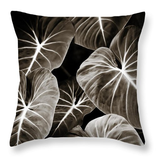 Elephant Throw Pillow featuring the photograph Elephant Ears On Parade by Marilyn Hunt