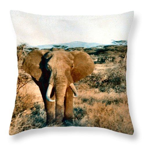 Elephant Throw Pillow featuring the photograph Elephant Eyes by Lin Grosvenor