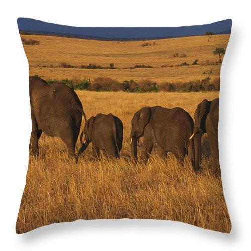 Elephants Throw Pillow featuring the photograph Elephant Family - Sunset Stroll by Sandra Bronstein