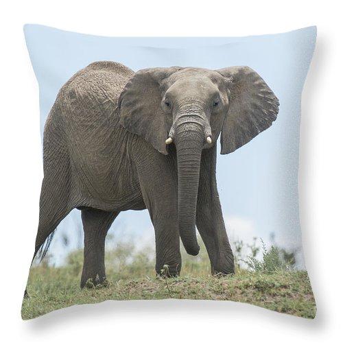 Safari Throw Pillow featuring the photograph Elephant Forward On Mound by Bryan Pereira