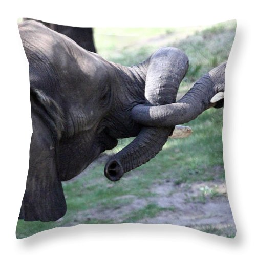 Animals Throw Pillow featuring the photograph Elephant Greeting IIi by Mary Haber