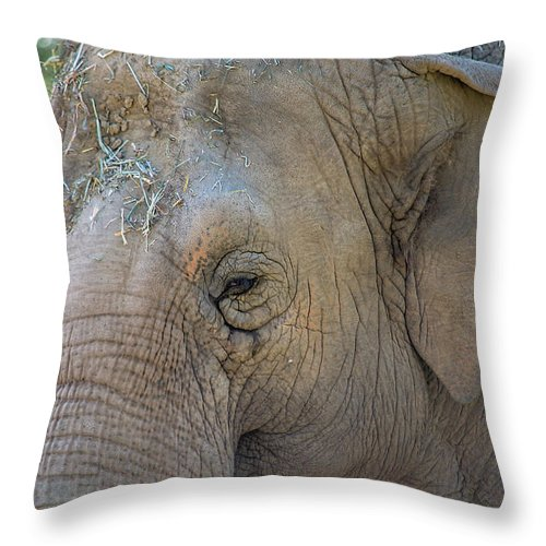 Elephant Throw Pillow featuring the photograph Elephant by Jay Billings