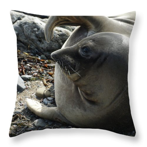 Elephant Seals Throw Pillow featuring the photograph Elephant Seal by Ernie Echols