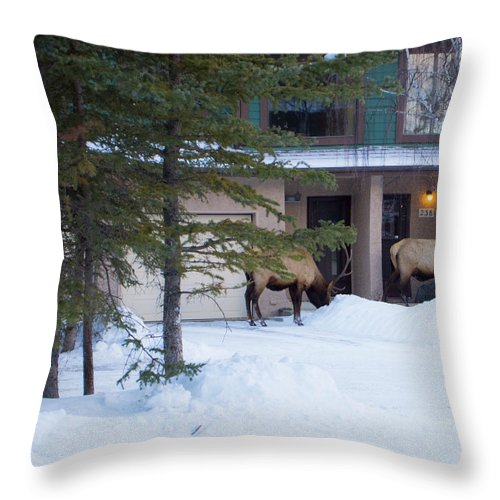 Elk Throw Pillow featuring the photograph Elk Come Calling by Jo-Anne Gazo-McKim