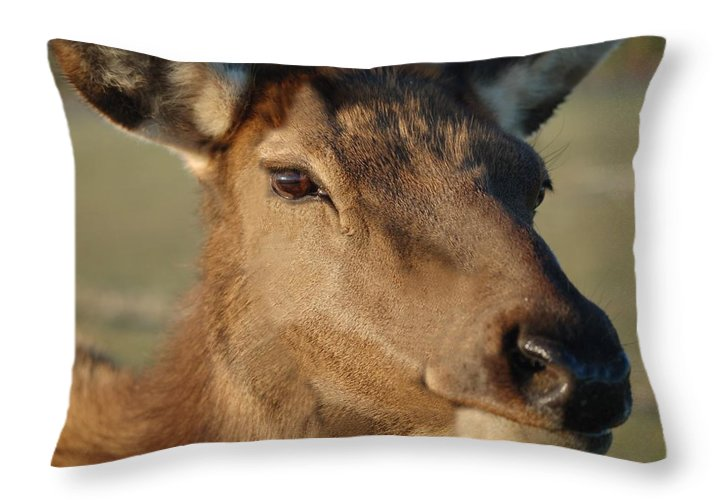 Nature Throw Pillow featuring the photograph Elk by D Nigon