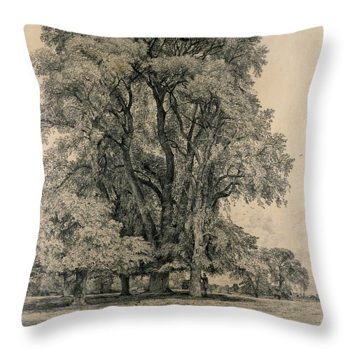 Elm Trees In Old Hall Park Throw Pillow featuring the drawing Elm Trees In Old Hall Park by John Constable