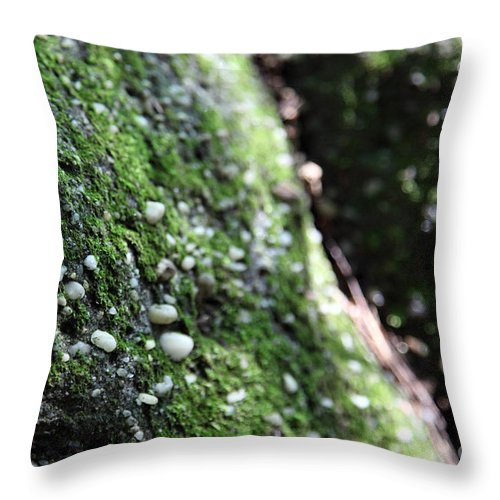 Rocks Throw Pillow featuring the photograph Embedded by Amanda Barcon