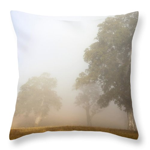Gum Tree Throw Pillow featuring the photograph Emerging From The Fog by Mike Dawson