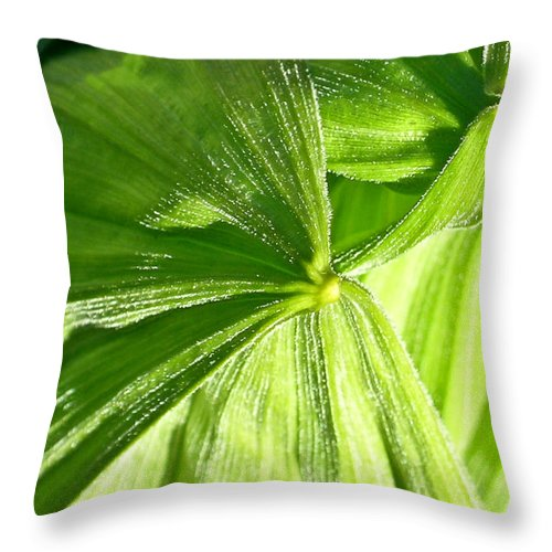 Plant Throw Pillow featuring the photograph Emerging Plants by Douglas Barnett