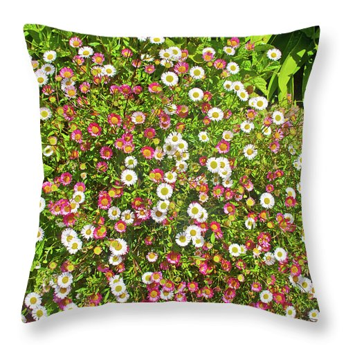 English Daisies At Pelican Inn Near Muir Beach In Muir Woods National Monument Throw Pillow featuring the photograph English Daisies At Pelican Inn Near Muir Woods National Monument, California by Ruth Hager