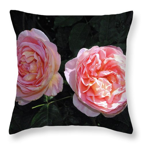 Flower Throw Pillow featuring the photograph English Rose Pink Abraham Darby by Robyn Stacey