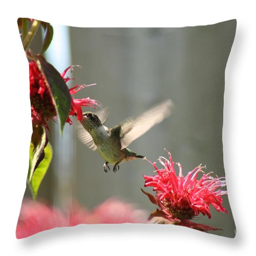 Hummingbird Throw Pillow featuring the photograph Enjoying The Bee Balm by Cathy Beharriell