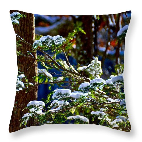 Forest Throw Pillow featuring the photograph Enlightened Winter by Dale Chapel