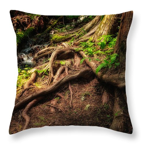Tree Throw Pillow featuring the photograph Entwined Roots by Jamie Tipton
