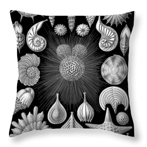 Ernst Haeckel Thalamorpha Plate Throw Pillow For Sale By Ambro Fine Art