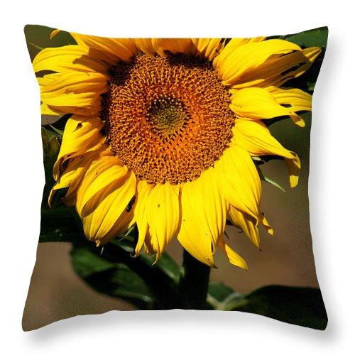 Sunflower Throw Pillow featuring the photograph Eternal Sun Flower by Nick Gustafson