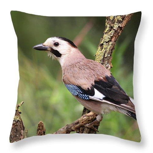 Eurasian Throw Pillow featuring the photograph Eurasian Jay by Alon Meir