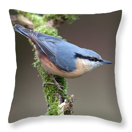Nuthatch Throw Pillow featuring the photograph European Nuthatch by Bob Kemp