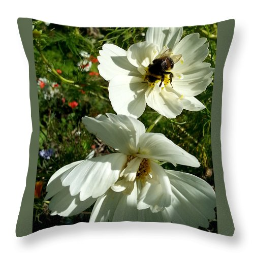 Throw Pillow featuring the photograph Evening Beauties by Helene Fallstrom