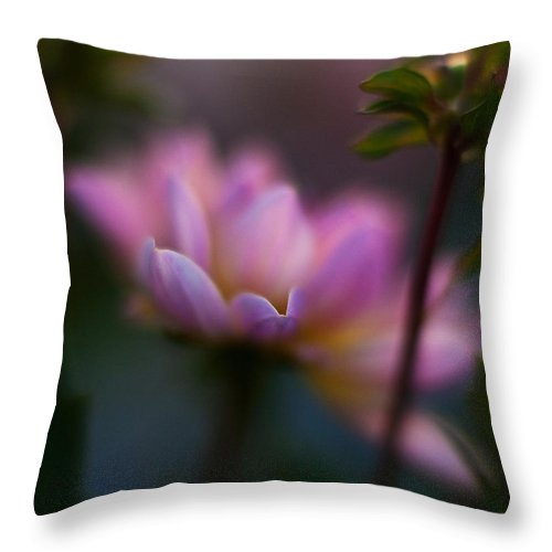 Evening Throw Pillow featuring the photograph Evening Dahlia by Mike Reid