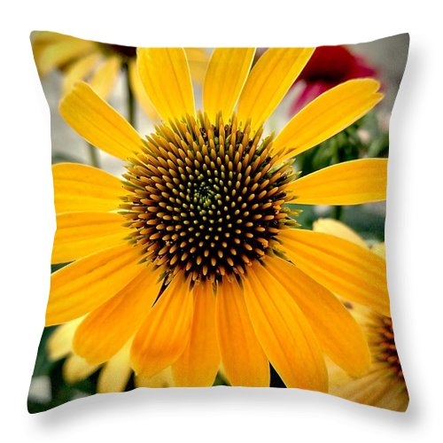 Evening Throw Pillow featuring the photograph Evening Flower by Amanda Myers
