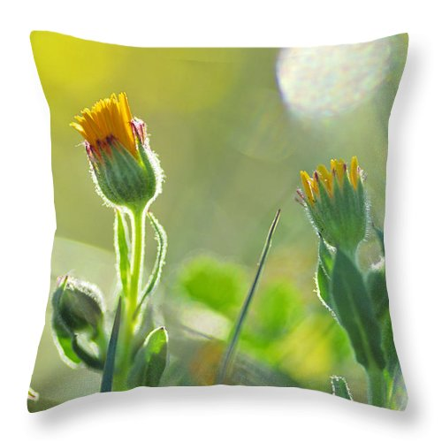Flower Throw Pillow featuring the photograph Evening Lights by Guido Montanes Castillo