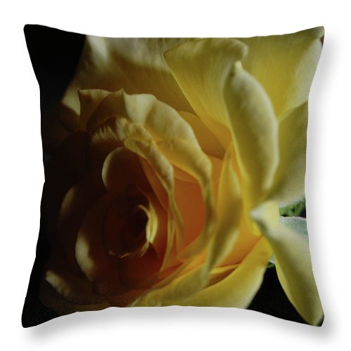 Rose Throw Pillow featuring the digital art Evening Rose by DigiArt Diaries by Vicky B Fuller