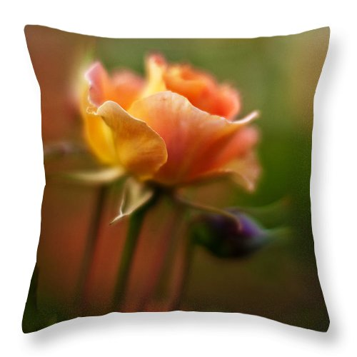 Rose Throw Pillow featuring the photograph Evening Rose by Mike Reid