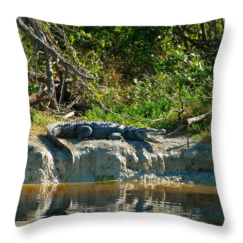 Everglades National Park Throw Pillow featuring the photograph Everglades Crocodile by David Lee Thompson