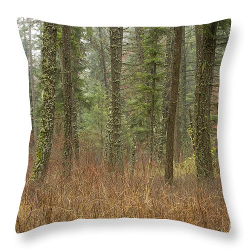 Fir Throw Pillow featuring the photograph Evergreen Fog by Idaho Scenic Images Linda Lantzy