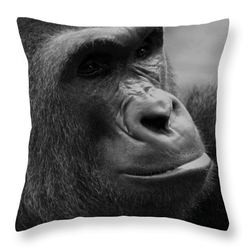 Africa Throw Pillow featuring the photograph Everyones Friend by Alan Look