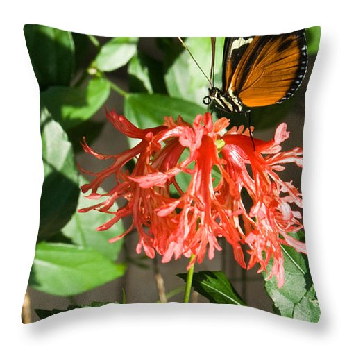 Butterfly Throw Pillow featuring the photograph Exotic Butterfly On Flower by Douglas Barnett