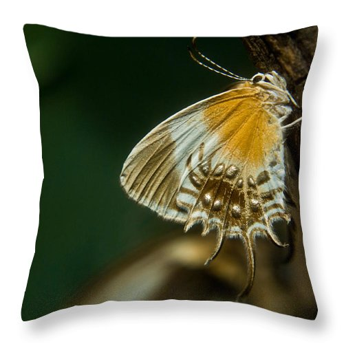 Butterfly Throw Pillow featuring the photograph Exotic Butterfly On Tree Bark by Douglas Barnett