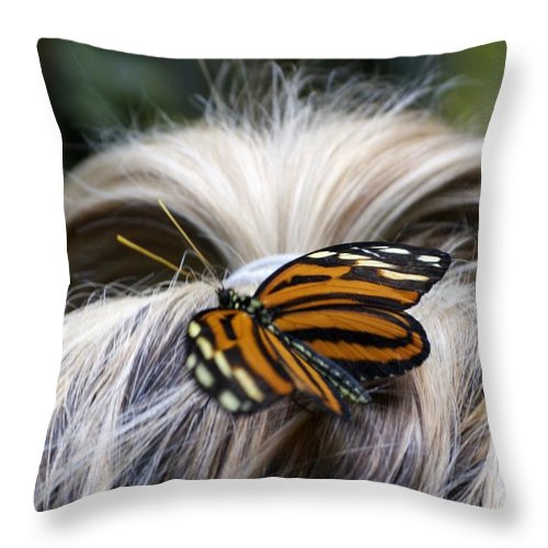 Butterfly Throw Pillow featuring the photograph Exotic Hairdo by Ann Horn