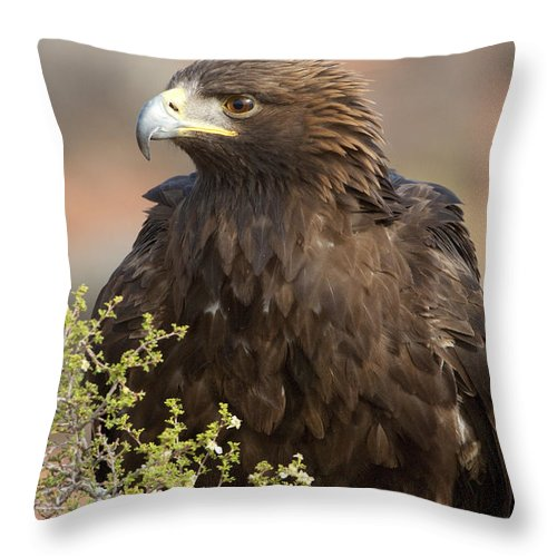 Golden Eagle Throw Pillow featuring the photograph Eye Of The Golden Eagle by Sandra Bronstein