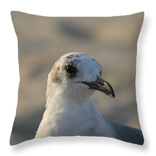 Animals Throw Pillow featuring the photograph Eye Of The Gull by Robert Banach