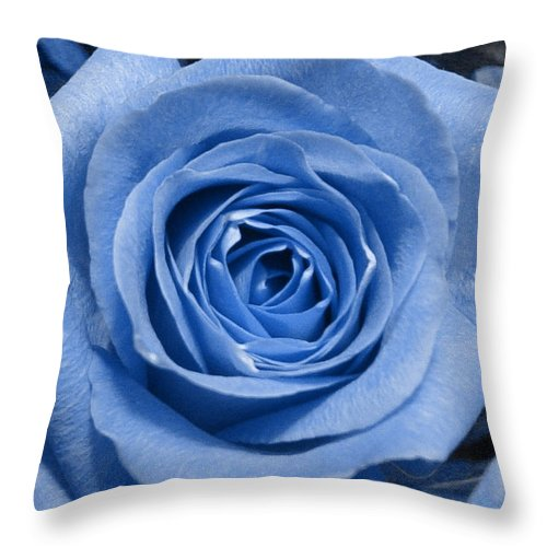 Rose Throw Pillow featuring the photograph Eye Wide Open by Shelley Jones