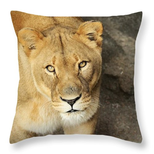 Lion Throw Pillow featuring the photograph Eyes Of The Lioness by Christopher Miles Carter