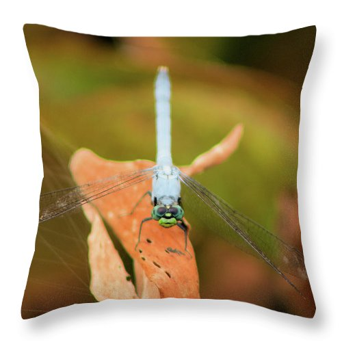 Dragonfly Throw Pillow featuring the photograph Face Of The Dragon by Karl Ford