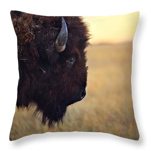 Buffalo Throw Pillow featuring the photograph Face The Day by Deborah Johnson