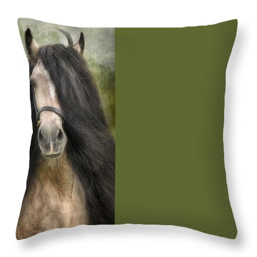 Horses Artwork Throw Pillow featuring the photograph Falcon by Fran J Scott