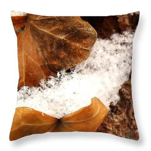 Fall Throw Pillow featuring the photograph Fall And Winter by Gaby Swanson