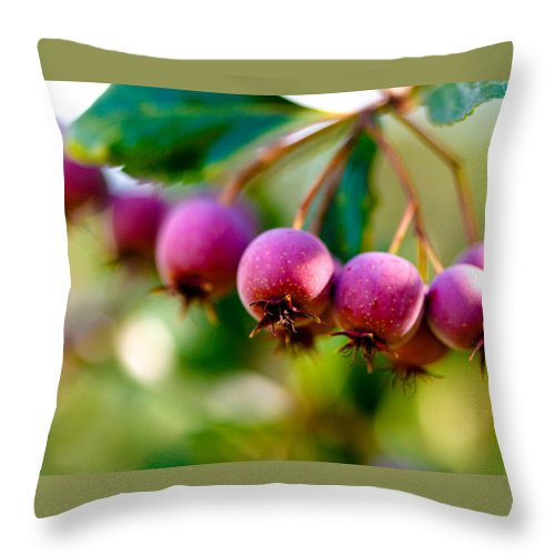 Berry Throw Pillow featuring the photograph Fall Berries by Marilyn Hunt
