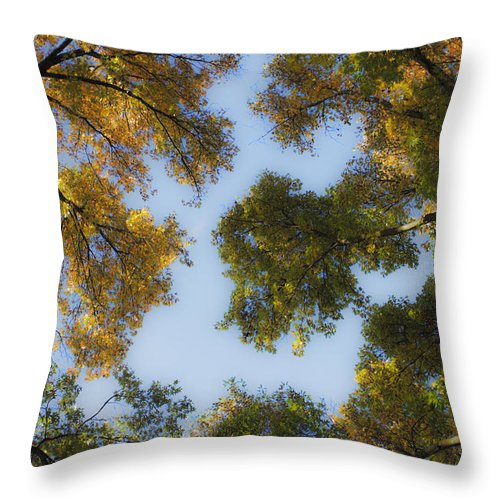 Fall Throw Pillow featuring the photograph Fall Canopy In Virginia by Teresa Mucha