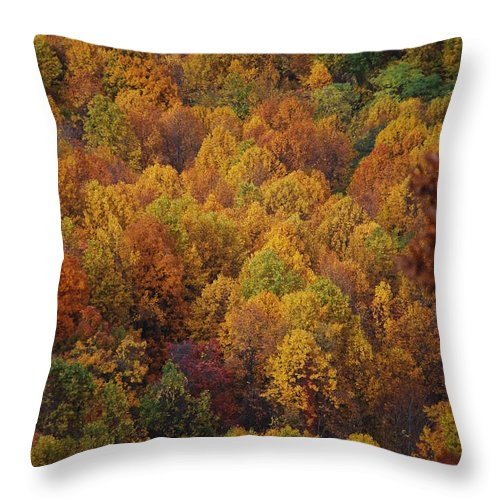 Fall Throw Pillow featuring the photograph Fall Cluster by Eric Liller