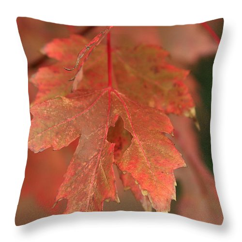 Throw Pillow featuring the photograph Fall Color In Softness by Deborah Benoit