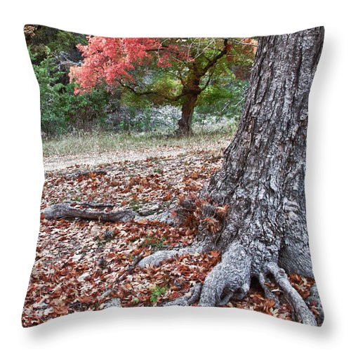 Landscape Throw Pillow featuring the photograph Fall Colors At Lost Maples by James Woody