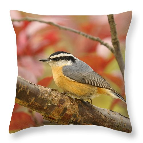 Red Breasted Nuthatch Throw Pillow featuring the photograph Fall Colors Nuthatch by Lara Ellis